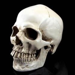 Halloween Schädel Geist Simulation Menschen Terrorist Cranium Schädel Heads