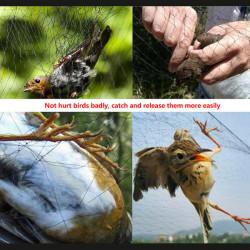 24 * 150cm Nylon meshy Garten Obst Gemüse Pflanzen Anti Vogel Netz