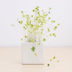 DIY Mini Ceramic Cactus Gräs Potted Plant Desktop Kontor Decor