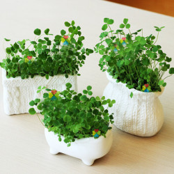 DIY Mini Creative Keramiska Gräs Krukväxt Decor