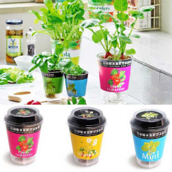 Mini Auto-absorbent Fresh Herbs Indoor Desk Potted Plants