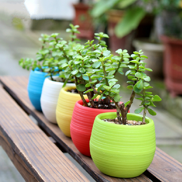 Mini Färgglada Round Saftiga Blomkruka Trädgård Kontor Heminredning Trädgårdsredskap