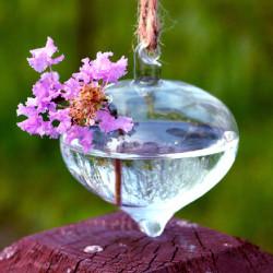 Zwiebel Form hängender GlasVase Wasserkulturanlagen Container
