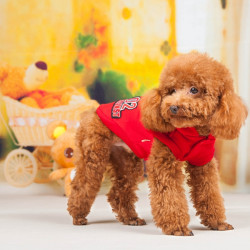 Fashion Hip Hop Pet Dog Cotton Winter Hood Sport Swater Coat