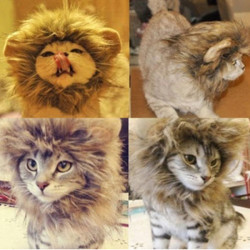 L Husdjur Hund Katt Artificiell LejonMane Peruk Halloween Kostym