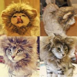 S Pet Dog Cat Artificial Lion Mane Wig Halloween Costume