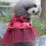 Summer Dog Dress Puppy Hot Drilling Wedding Dress Lace Doggy Skirt Pet Supplies