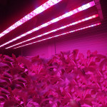 370mm 8.64W Waterproof High Power 8LED Tube Strip Grow Light Lamp LED Lighting