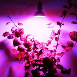 E27 3.8W 80 LED Licht Betriebslampe Hydrokultur AC Wachsen 110 / 220V