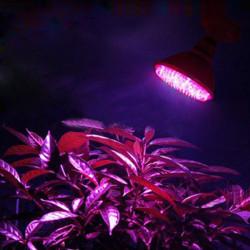 E27 3W 60 LED Grow Light Plant Lamp Hydroponic AC 110V/220V