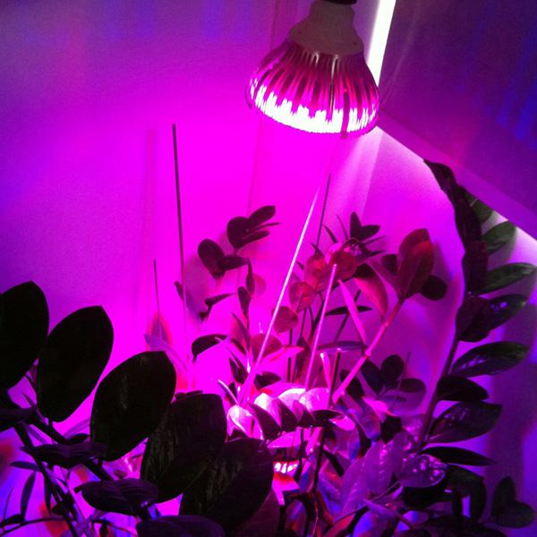 E27 7W Rød Blå Hydroponiske Plant LED Vækstlampe Lamp Pære 220V LED Belysning