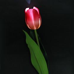 LED Solar Tulip Flower Have Sparepære Lys Stake Til Dekoration