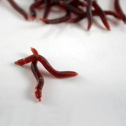 1pc Blød Regnorm Fiskegrej Endegrej Silikone Rød Worms Bait Plast