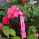 100st Vattentät Trädgård Växter Vegetabiliska Frukt Etiketter 2021