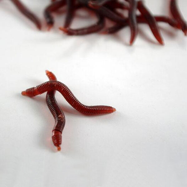 Buy 20pcs soft earthworm fishing lures silicone red worms for Worms for fishing bait