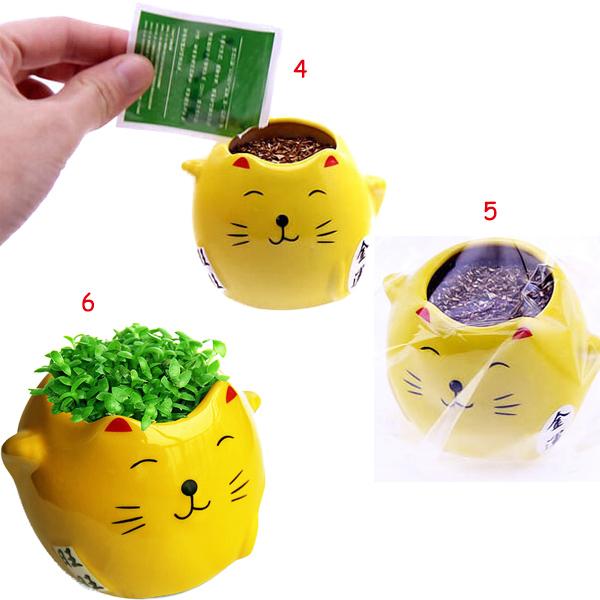 Buy Cat Grass Seeds Australia