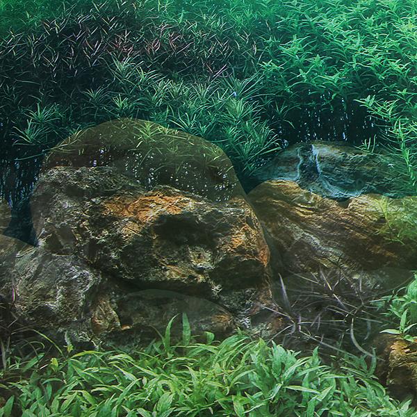 G?nstig Kaufen Doppelseitige Aquarium Landschaft Poster Fish Tank ...