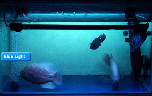 Buy 18cm aquarium fish tank waterproof led light bar for Where to buy fish tanks