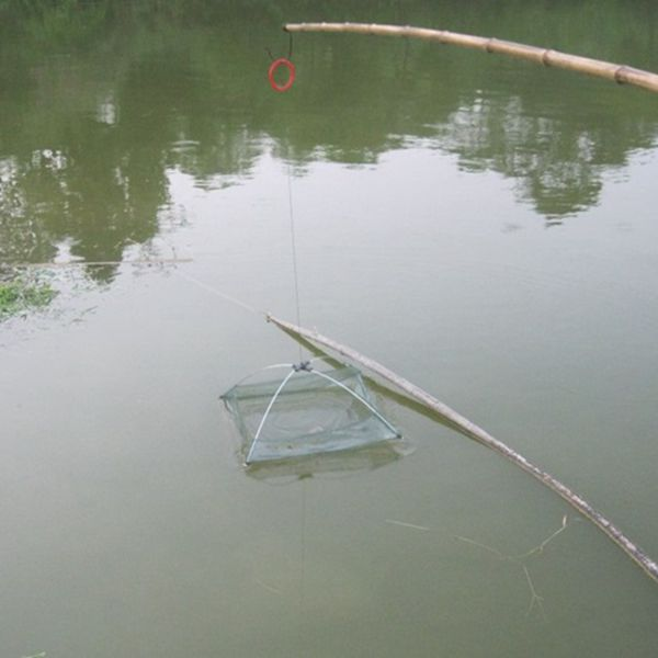 how to put bait in fish trap rust